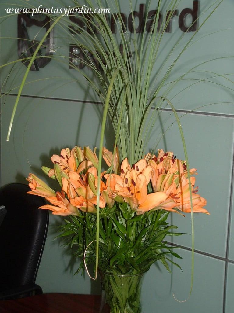 Liliums naranjas con Cortaderas.