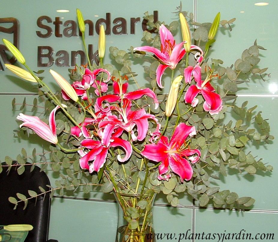Liliums perfumados, en gamas de rosados, con Eucalyptus cinerea en bouquet floral.