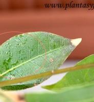 Cómo podemos prevenir las Plagas & Enfermedades en las plantas