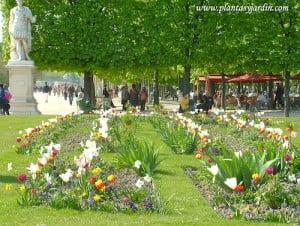macizos florales de bulbosas Tulipanes Fritillarias Narcisos y Muscaris