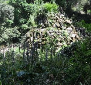 Acantos florecidos en la sombra en el Parque del Laberinto de Horta en Barcelona