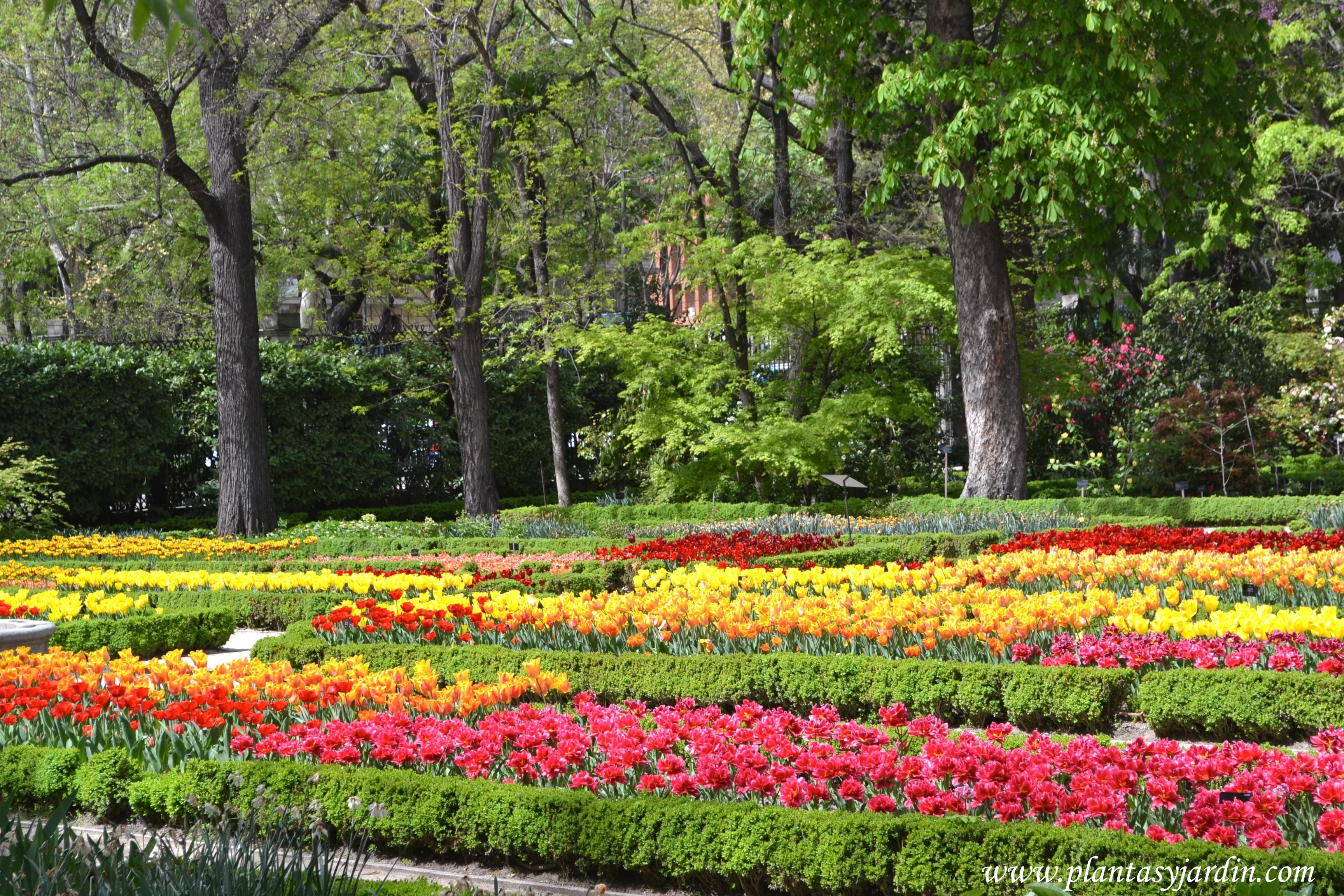 Tulipanes florecidos en primavera en el Real jardín Botánico de Madrid.