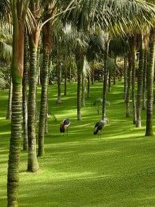 grulla en Parque Loro. Foto: Wikipedia