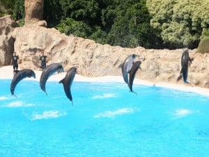 show de delfines en Parque Loro. Foto Wikipedia