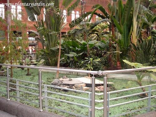 estanque con tortugas, peces y plantas acuáticas en el Jardín Tropical de Atocha