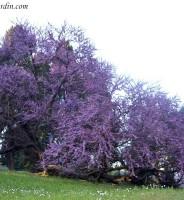 Remedios caseros, naturales y ecológicos para las plantas
