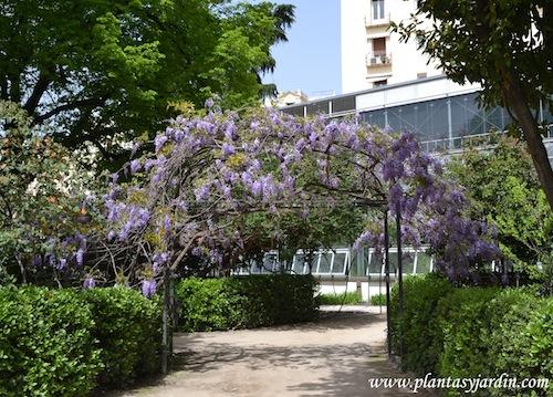 Plantas trepadoras para pergolas wisteria jardn madrid combinar plantas trepadoras clematis y - Plantas trepadoras para pergolas ...