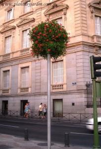 plantas de estación que decoran las calles madrileñas