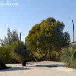 Xanthorrhoea glauca flora nativa de Australia