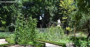 el huerto del Real Jardín Botánico de Madrid, en verano