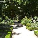 puerros y Girasoles, en verano, huerto del Real Jardín Botánico de Madrid