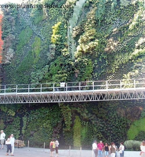 jardín o muro vegetal de la Caixa Forum en Madrid