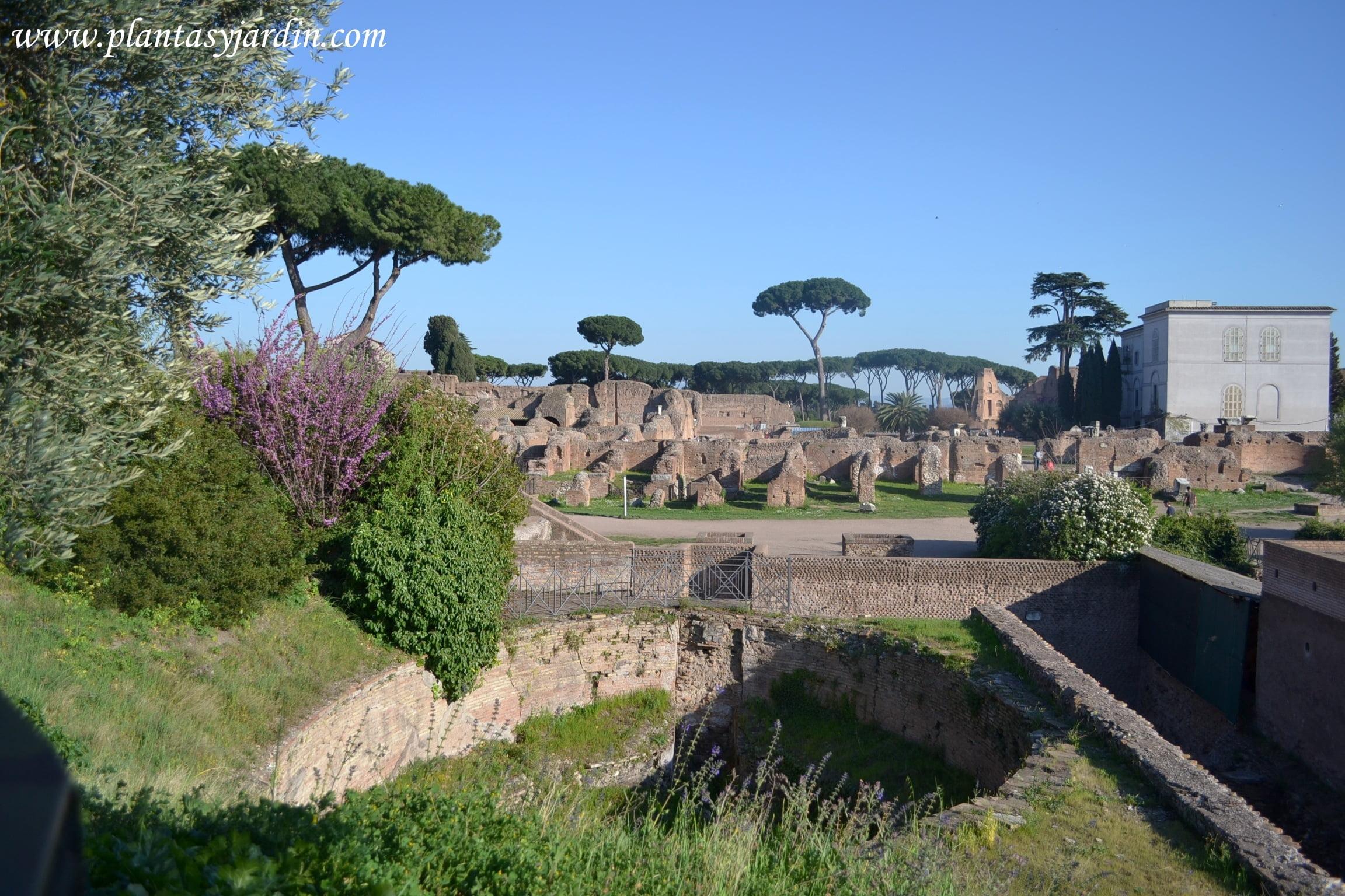 vistas de los restos de los jardines Farnesianos en el Monte Palatino y el museo del Palatino