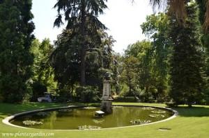 estanque con Nenúfares perennes rodeado de coníferas.