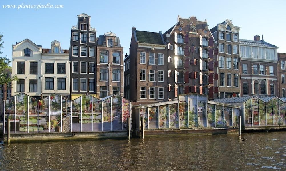 Bloenmenmarkt, mercado flotante de flores de Ámsterdam