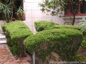 Plantas para sombra plantas jard n for Arbustos para patios