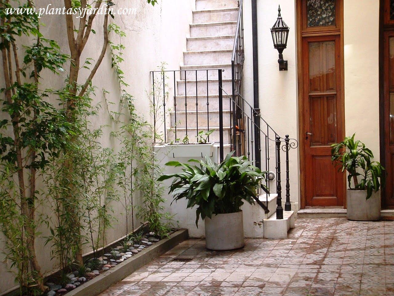 Plantas para sombra plantas jard n - Plantas para patios interiores ...