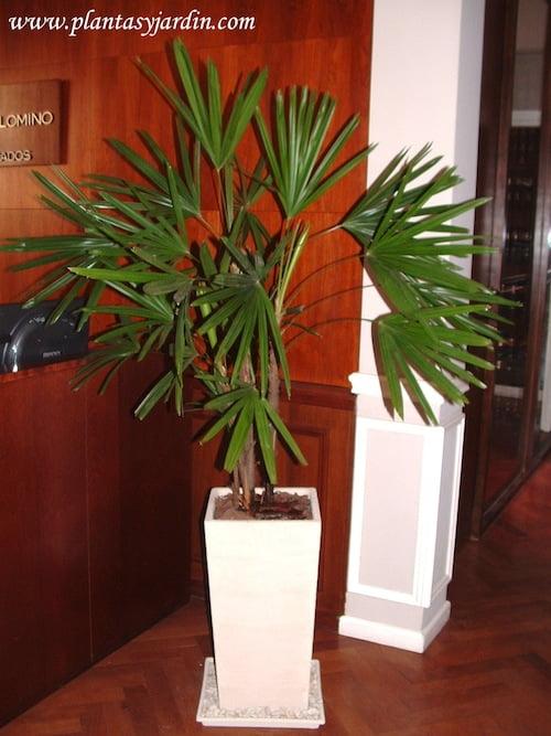 Plantas para sombra plantas jard n for Plantas de interior altas