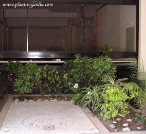 Plantas para sombra plantas jard n for Jardines sin plantas