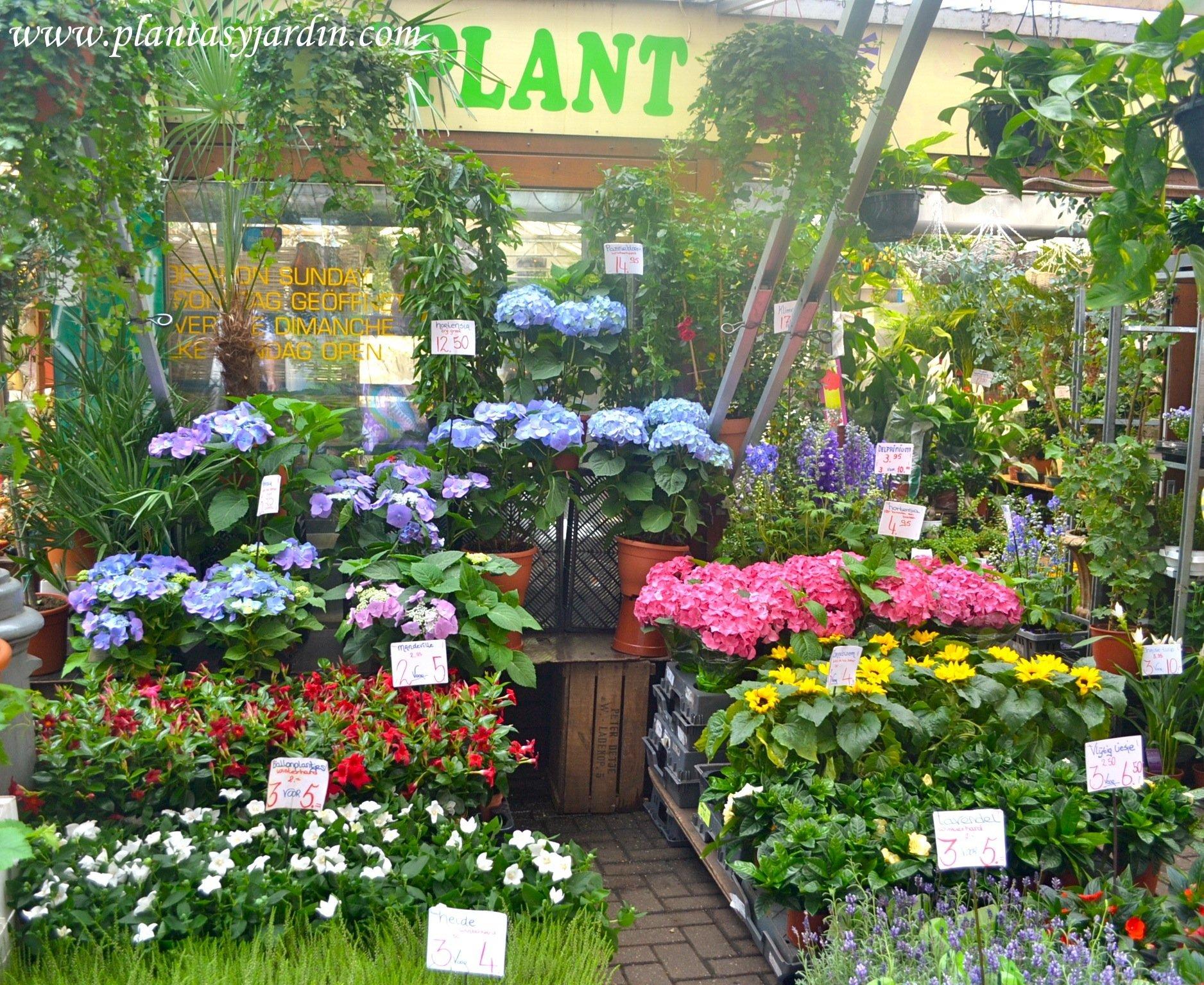 plantas y flores frescas en el mercado de Boemenmarkt, Ámsterdam