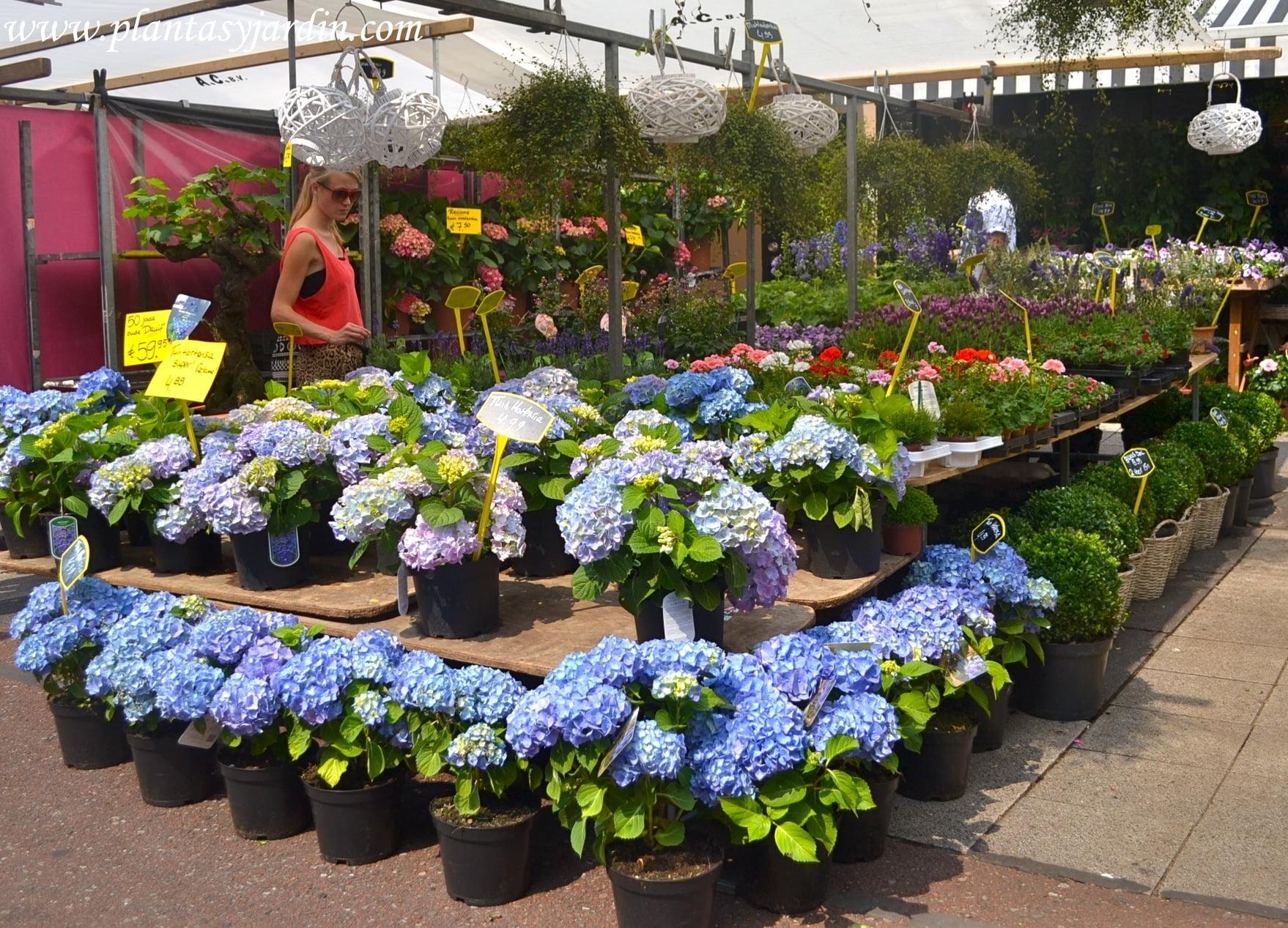 Consejos para comprar plantas plantas jard n for Plantas que hay en un vivero