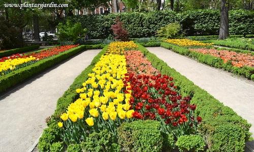 Tulipanes diferentes cultivares en parterres