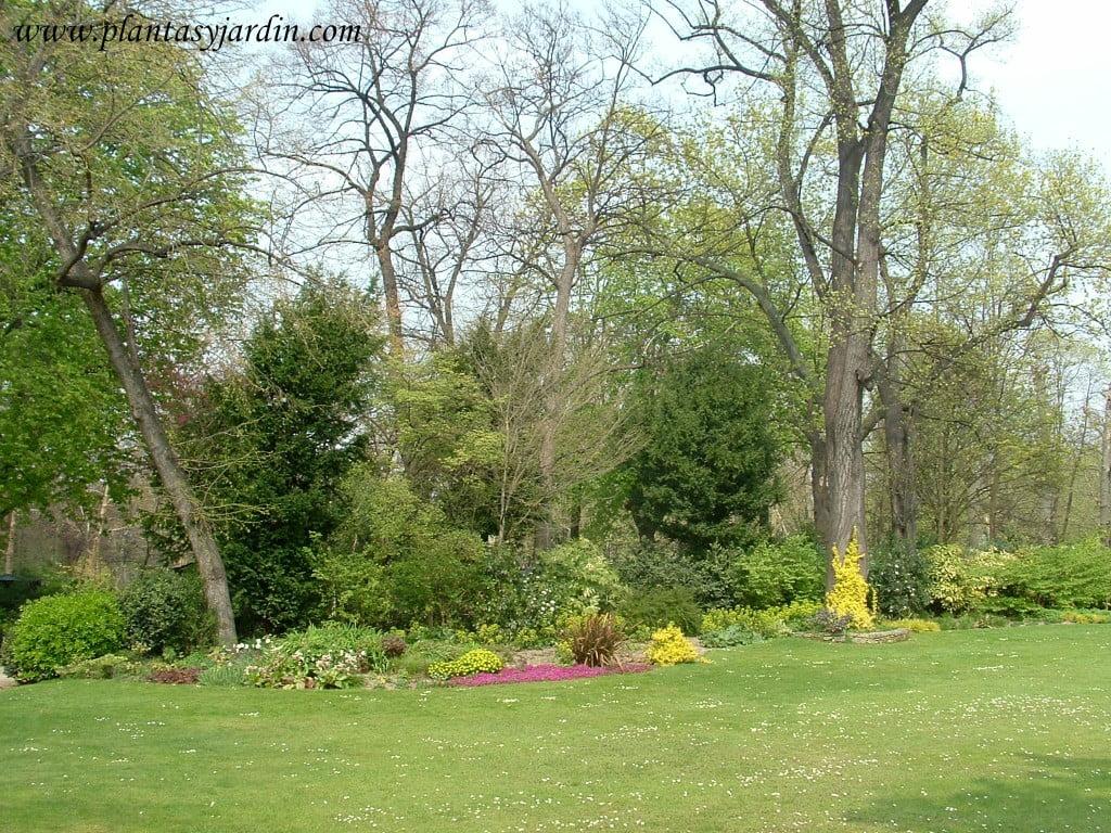 Fotos de jardines con c sped artificial galer a for Cuidados del jardin