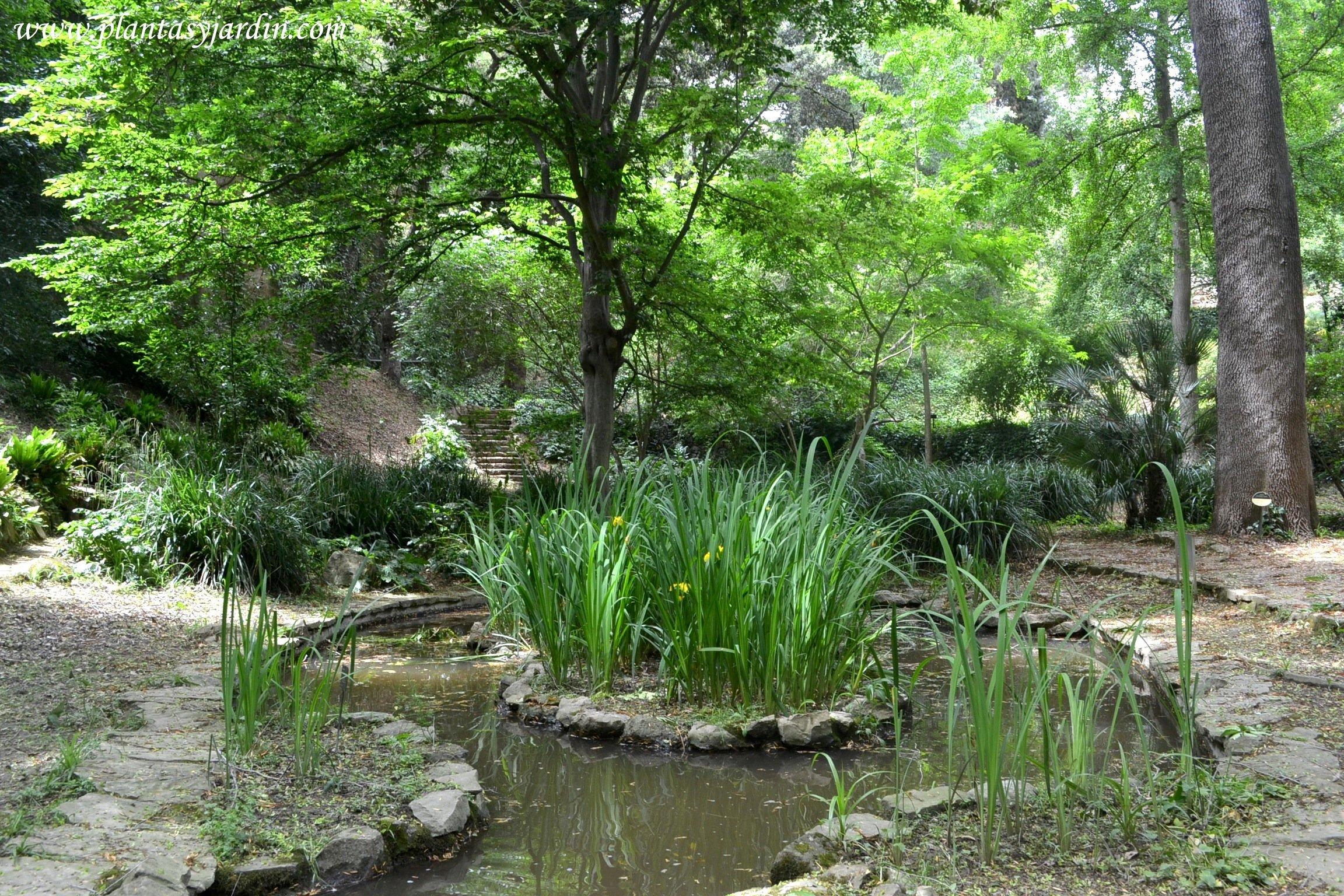 estanque con Iris pseudacorus florecidos en la primavera
