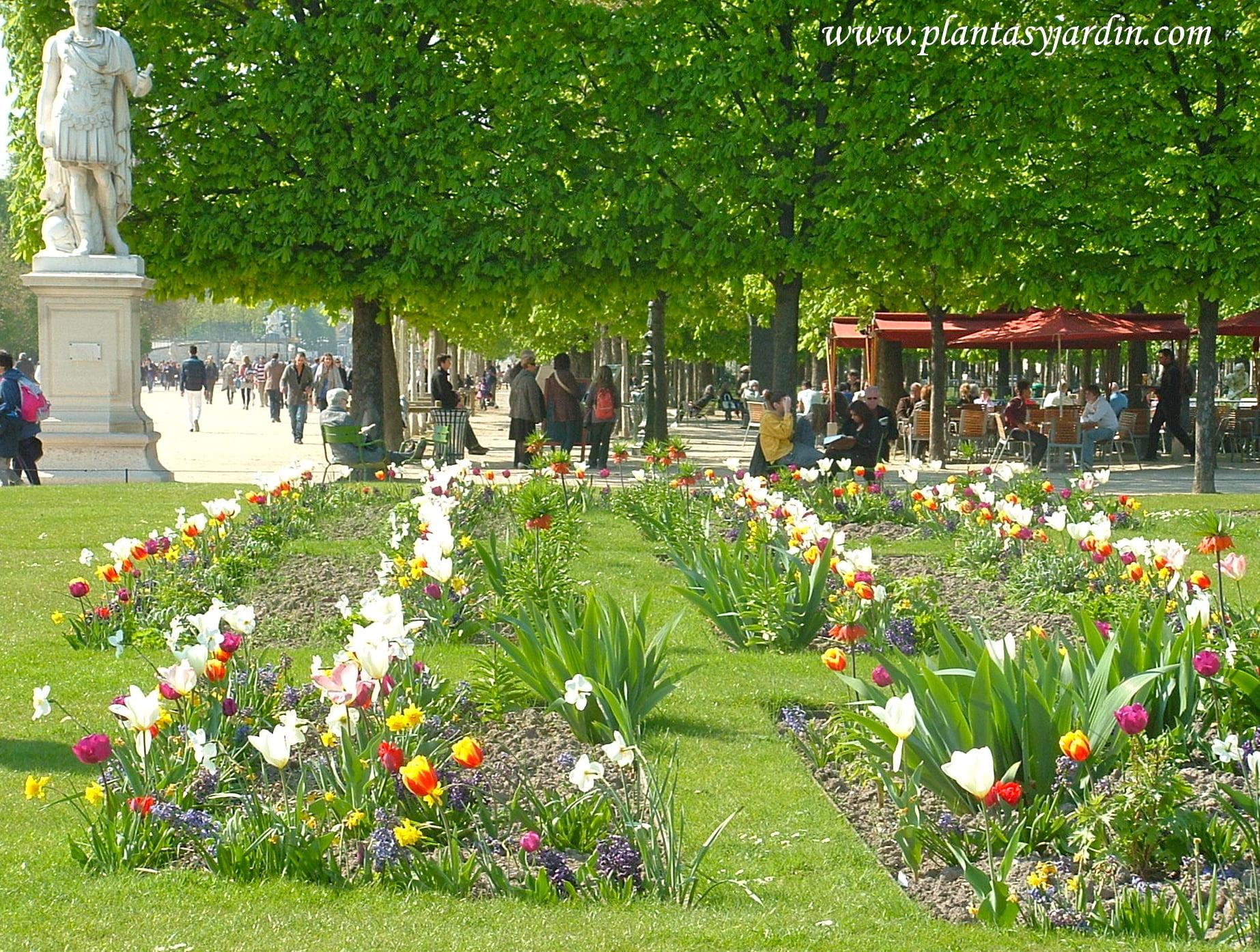macizos florales de bulbosas Tulipanes, Fritillarias, Narcisos, y Muscaris