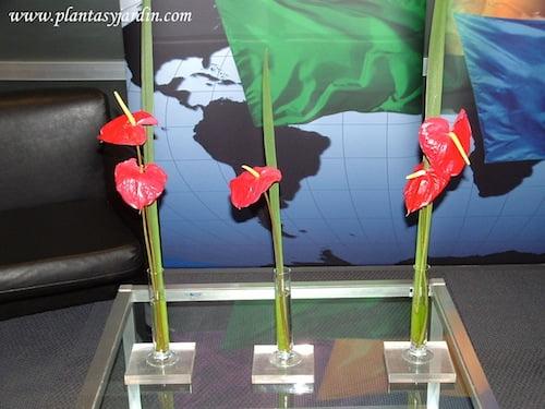 Anthurium rojos con follaje de Iris