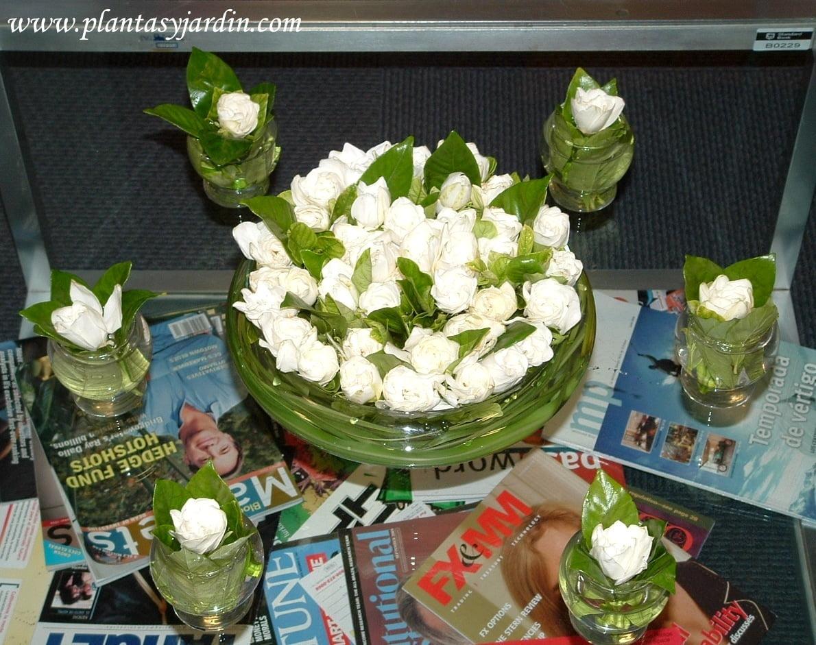 Arreglo floral perfumado con Jazmines del Cabo y follaje de Cortadera