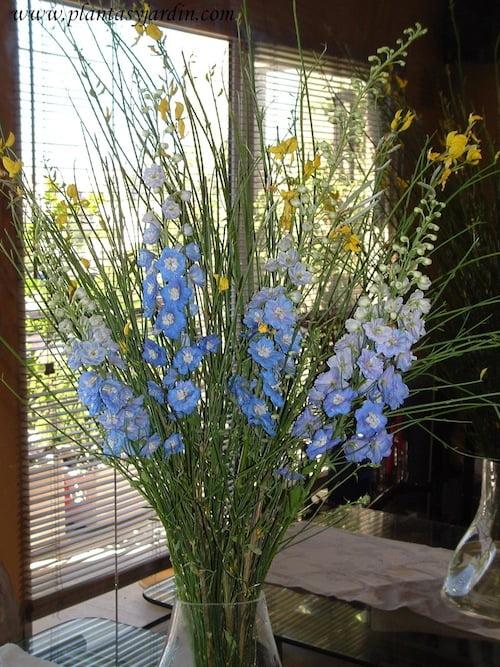 Delphinium con Retama en flor