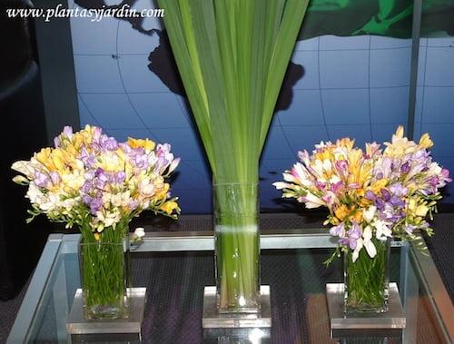Fresias con Iris en bouquet floral