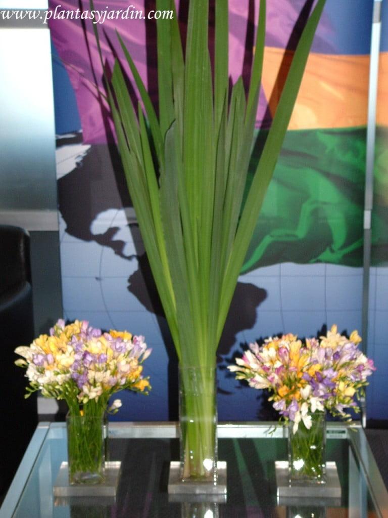 Fresias en bouquet floral con follaje de Iris