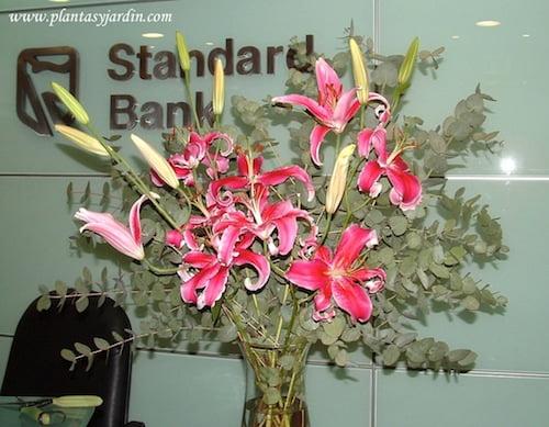 Lilium Stargazer con follaje de Eucalypto cinerea en bouquet floral