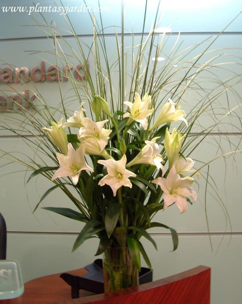 Lilium candidum con follaje de Cortadera en bouquet floral perfumado