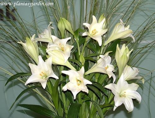Lilium candidum o Azucenas en bouquet floral