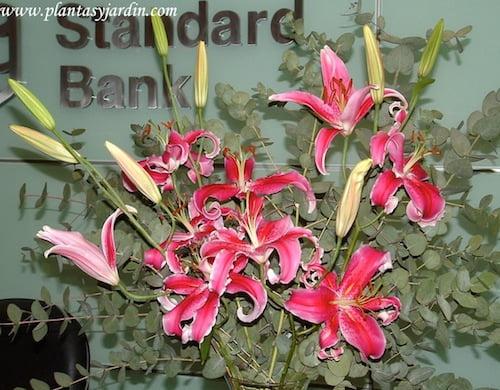 Liliums Stargazer perfumados con Eucalyptus cinerea un bouquet floral muy llamativo