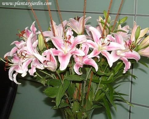 Liliums orientales perfumados en bouquet floral