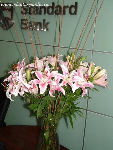 Liliums perfumados con varas de mimbre