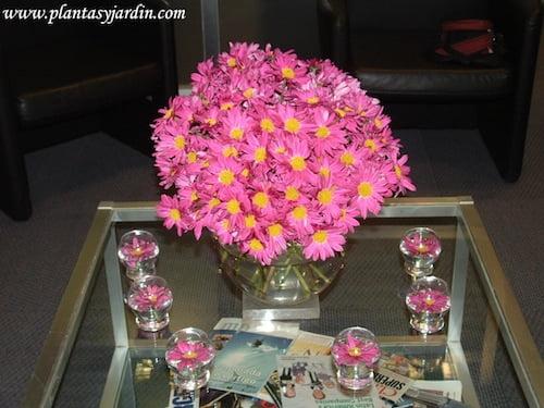 Margaritas fucsias en un atractivo y colorido Bouquet floral