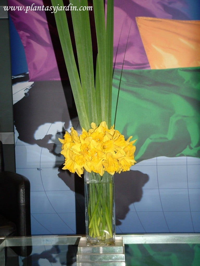 Narcisos bouquet con follaje de Iris en base de acrilico
