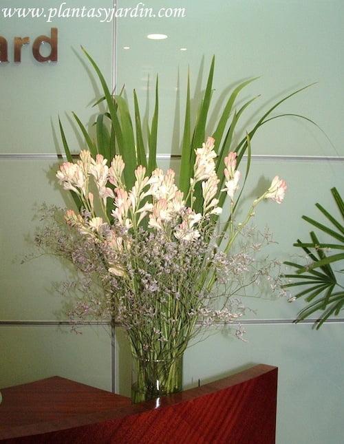 Nardos en bouquet floral con perfume natural