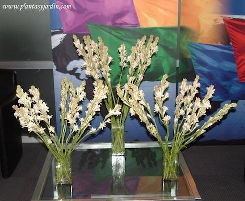 Nardos En Bouquet Floral De Tres Plantas Y Jardín