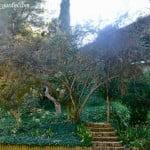 Cotoneaster pannosus y Pyracantha angustifolia en otoño