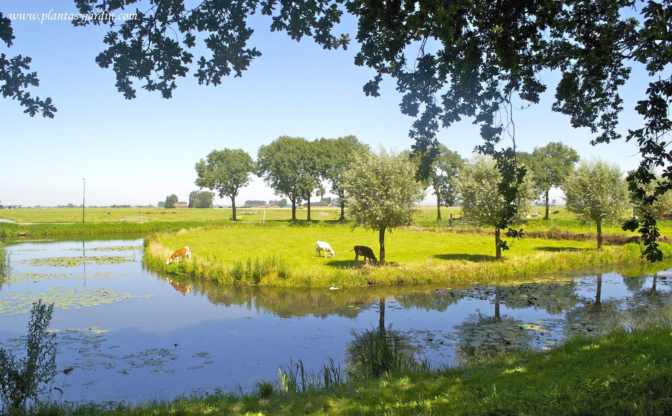 el campo holandés, Voladem en Edam, norte de Ámsterdam