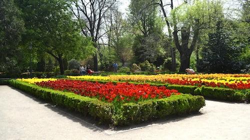 Tulipas florecidas a comienzos de la primavera