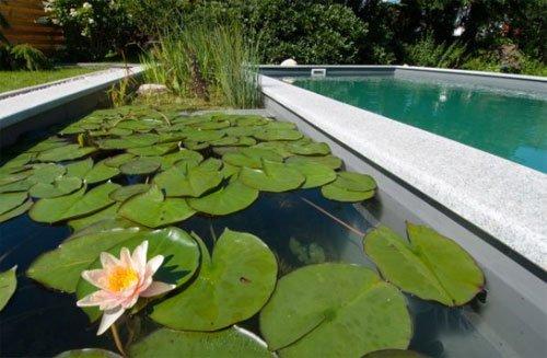 Detalle de Nenufares en una piscina natural