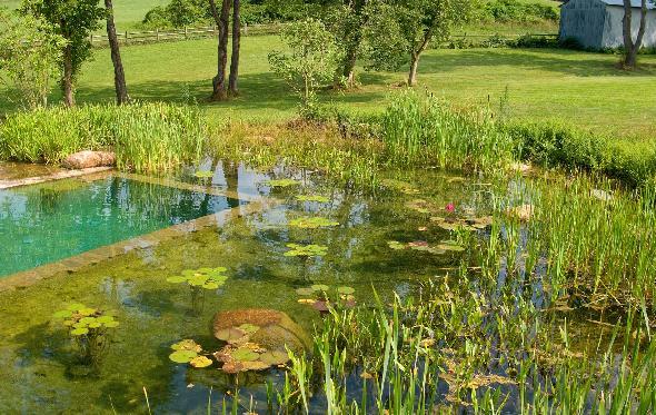 Detalle de plantas acuaticas