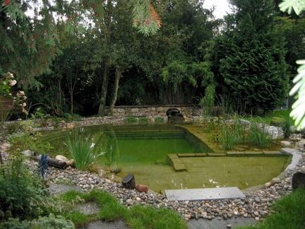 Piscina natural simula ser un estanque
